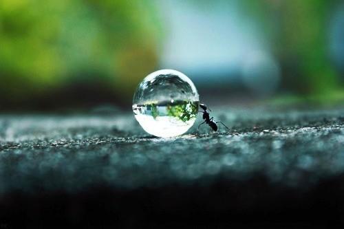 As vitórias cotidianas não bastam; é preciso que o mundo as reconheça